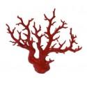 Coral rojo